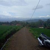 Sawah Lias Pinggir Jalan (14937549) di Kota Bandung