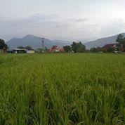 Tanah/Lahan Potensial Zona Kuning 220tumbak Cimaung Bandung Selatan (14989649) di Kota Bandung