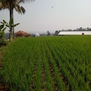 Sawah Luas Pinggir Jalan (15622557) di Kota Bandung