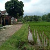 Sawah Luas Pinggir Jalan (15622625) di Kota Bandung