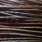 Bambu Cendani Sisik Naga (15635293) di Kab. Wonosobo
