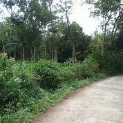 Lahan Matang Zona Kuning 1-2Hektar Desa Mekar Laksana Ciparay (15671445) di Kota Bandung