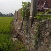 Sawah Luas Pinggir Jalan (15803545) di Kota Bandung