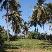 Tanah Los Pantai Di Yeh Kuning Jembrana Bali (15931869) di Kab. Jembrana