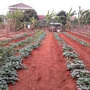 Tanah Kavling Di Islamic Village Karawaci, Tangerang