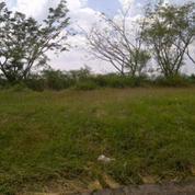 Tanah Sangat Luas Surat SHM Di Jalan Ahmad Yani, Nganjuk (17019011) di Kab. Nganjuk