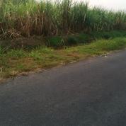 Tanah Bejijong Mojokerto