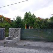 Rumah Halaman Luas Lingkungan Asri Turi Sleman (17328059) di Kab. Sleman