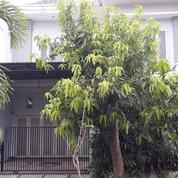Rumah Di Purimas Bergaya Modren, Cocok Untuk Investasi Masa Depan, Surabaya (17707015) di Kota Surabaya