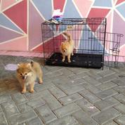 Penitipan Anjing Surabaya Pet Care Zegenen Kennel