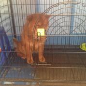 Penitipan Anjing Sidoarjo Kandang Atau Tanpa Kandang