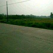 20 Hektar Tanah Industri Cikande Banten (17859483) di Kab. Serang