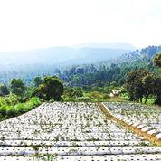 Tanah Untuk Villa Gunung Putri Lembang (17904623) di Kota Bandung