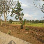 Tanah Lt 6190m2 Nganjuk, Lokasi Dekat Dengan 0 Jln Provinsi (17964455) di Kab. Nganjuk