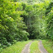 Tanah Kebun Di Kawasan Belimbing Pupuan Selemadeg Tabanan (18074755) di Kota Denpasar
