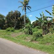 Tanah Di Jl Utama Tangguntiti Selemadeg Timur Tabanan Dekat Villa Alami (18077211) di Kota Denpasar