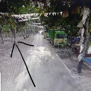 Tanah Di Surodadi Gringsing Batang Jateng Luas 16.000 Rp 300/ M Cocok Untuk Perumahan (18106963) di Kota Bekasi