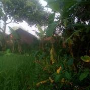 Tanah Kavling Spesial Jombang Promo