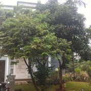 Rumah Mewah Dan Indah Cluster Chalcedony Gading Serpong (18362651) di Kota Tangerang