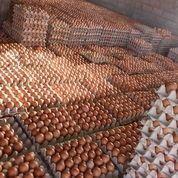 Telur Ayam Bebek Dan Puyuh