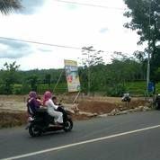 Tanah Kav Strategis Cocok Sekali Untuk Invest Dekat Jln Utama (18750439) di Kab. Jember