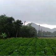 Tanah Murah Kavling Produktif Jamur Tiram Cocok Untuk Investasi (18939455) di Kota Depok