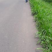 Tanah Strategis Pinggir Jalan Ciapus Taman Sari Ciomas Bogor