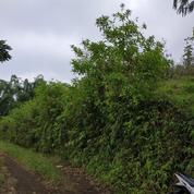 Tanah 7000m Poncokusumo Tumpang Malang (19069575) di Kab. Malang