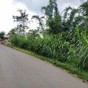 Tanah 700m Poros Jalan Kemiri Jabung Malang (19069695) di Kab. Malang