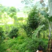 Beli Tanah Luas Bonus Pepohonan Dan View Sawah Cuma Di Jl. Wanayasa (19198527) di Kab. Purwakarta