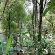 Tanah Kebun Cengkeh Tempursari Lumajang (19261631) di Kab. Malang