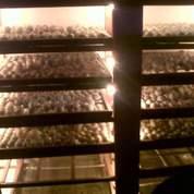 #Info Tempat Dod Bebek Di Bogor Dan Cianjur