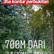 Tanah Kebun Berbukit Di Jalan Ciomas - Anyer Kab Pandeglang Banten (19459611) di Kab. Pandeglang