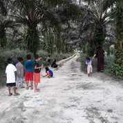 Kebun Kelapa Sawit (19703019) di Kota Palembang