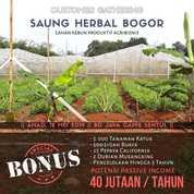 Saung Herbal Produktif Dg Passive Income 40jt (19898167) di Kota Bogor