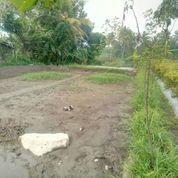 Tanah Sawah Pinggir Jln Aspal (20077075) di Kota Yogyakarta