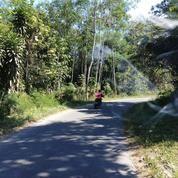 Tanah Pekarangan 500 Meter Di Jalan Palagan Km 22 Sleman Yogyakarta (20597003) di Kab. Sleman