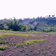 Tanah Lokasi Dau Malang Dekat Kampus Bisa Ada Bonusnya (20618091) di Kab. Malang