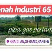 Tanah Ciruas 65 Hektar Ciruas Bisa Partial Kab Serang Propinsi Banten (20760659) di Kab. Serang
