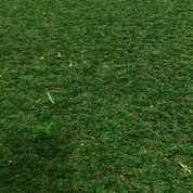 Rumput Gajah Mini,Tukang Rumput Taman