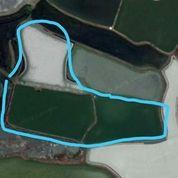 Tanah Murah Gresik 1,4 Hektar Ambeng-Ambeng Gresik (20846323) di Kab. Gresik