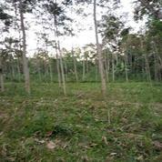 Tanah Jabung 4000 Meter Malang Jawa Timur (20875359) di Kab. Malang