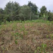 Tanah 1000m Lokasi Wisata Coban Jodo Jabung Malang (20876971) di Kab. Malang
