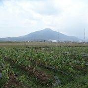 Tanah Potensial Pinggir Jalan Provinsi (20925687) di Kota Bandung