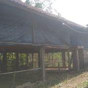 Tanah Kebun Produktif Subur Sudah Ada Kandang Ayam (21009559) di Kab. Jembrana