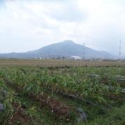Tanah Potensial Untuk Gudang Dan Workshop Subang (21046679) di Kota Bandung