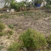 Tanah Kavling Ukuran 12 X 14 M2 Di Daerah Ngablak Kepatrihan Gresik Siap Bangun (21161335) di Kab. Gresik