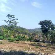 Tranah Kavling Lokasi Bahgus View Gunung Dan Sawah Terasering (21175771) di Kab. Jember