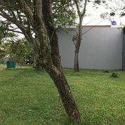 Tanah Kavling, Hook, Di The Icon BSD, Cluster Vendant View (21209227) di Kota Tangerang Selatan