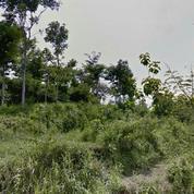 Tanah Di Tlekung Kota Batu 3km Dr Bns, View Sangat Bagus, Dkt UIN (21226251) di Kota Batu